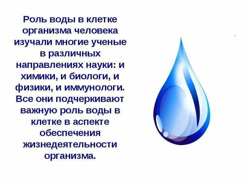Важная роль воды в клетке человека
