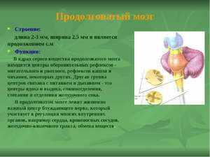 Функции продолговатого мозга