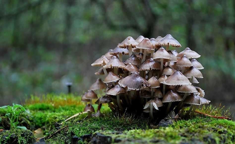 грибы съедобные и несъедобные