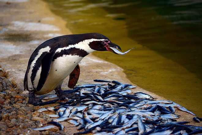 антарктида животные (главный ключ)