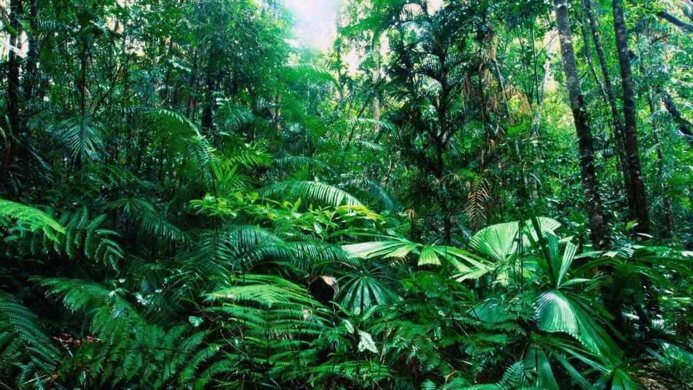 Тропический лес: флора и фауна - Научно-популярный журнал: «Как и ...