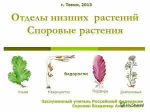 Низшие споровые растения