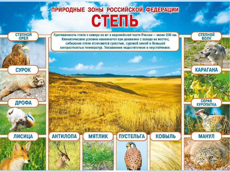 животные степи россии (главный ключ)