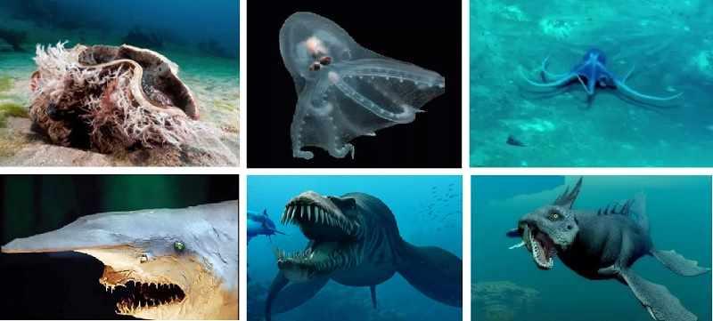 преобладающие глубины тихого океана