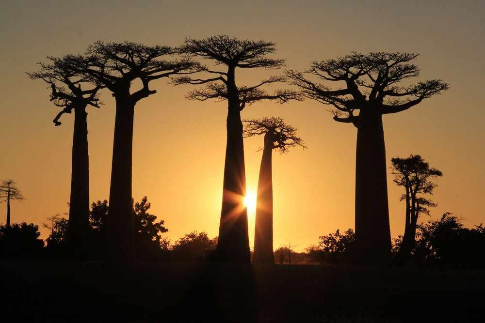 Мадагаскар - уголок дикой природы не похожей ни на что ...