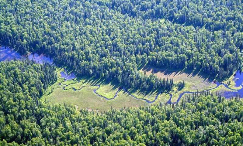 подпиши этажи экосистемы леса