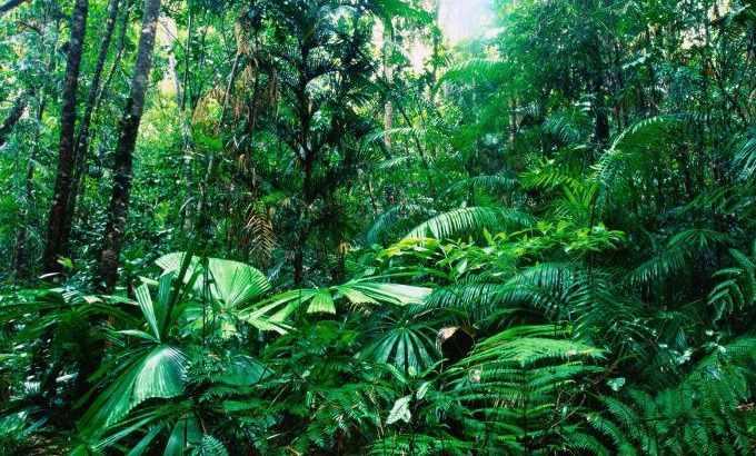 Растения тропики. Где растут тропические леса? Животный мир ...