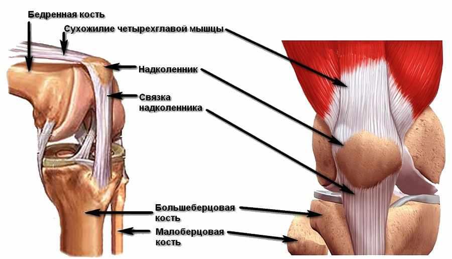 Как укрепить сухожилия и связки