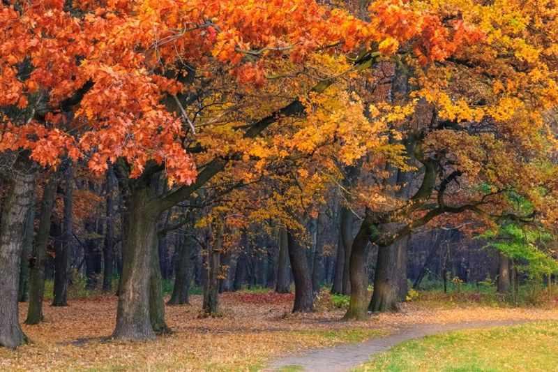 описание природной зоны