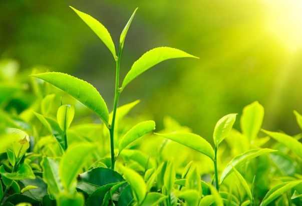 фотосинтез значение (главный ключ)