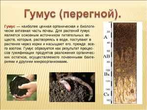 Как используется гумус
