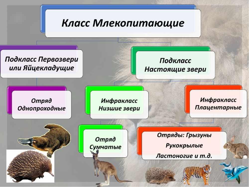 виды животных список