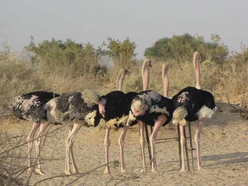 Самые большие птицы