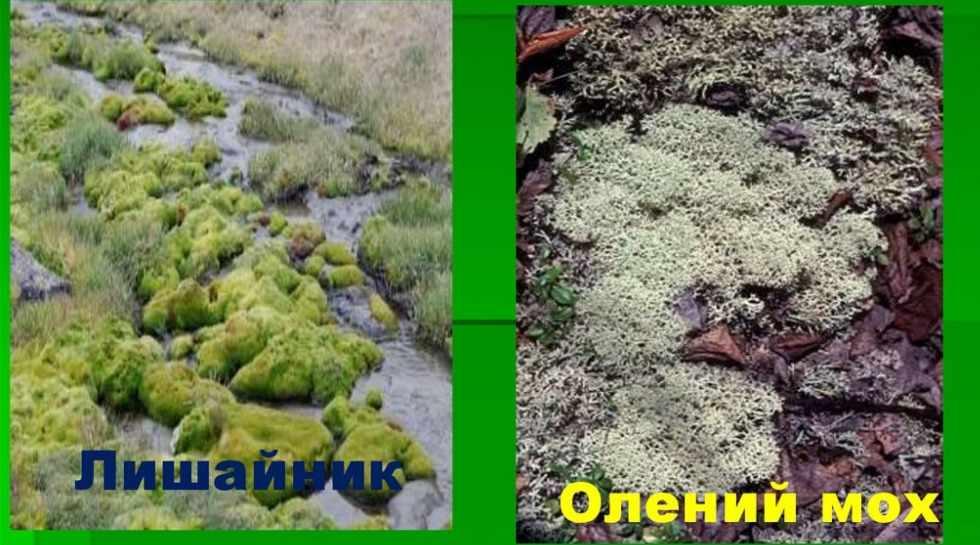 Растительный и животный мир России - презентация онлайн