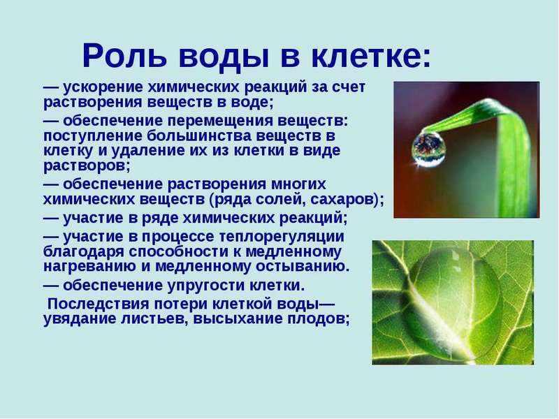 Вывод шлаков и токсинов из клетки через воду