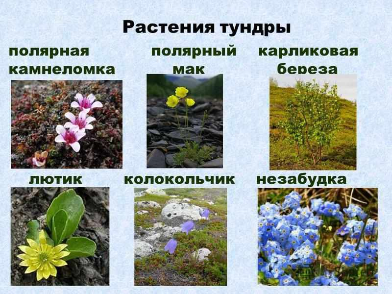 Презентация на тему: Презентация на тему: Природные зоны России ...