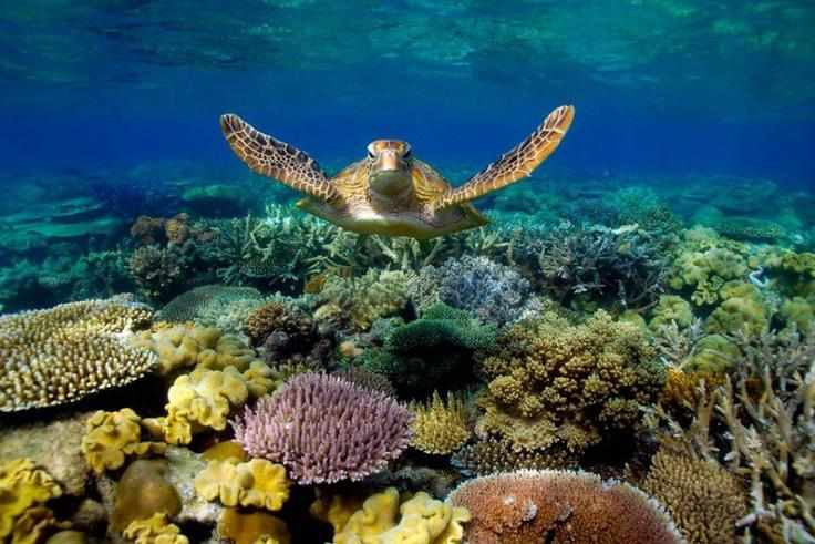 Флора и фауна атлантического океана фото (19 штук)