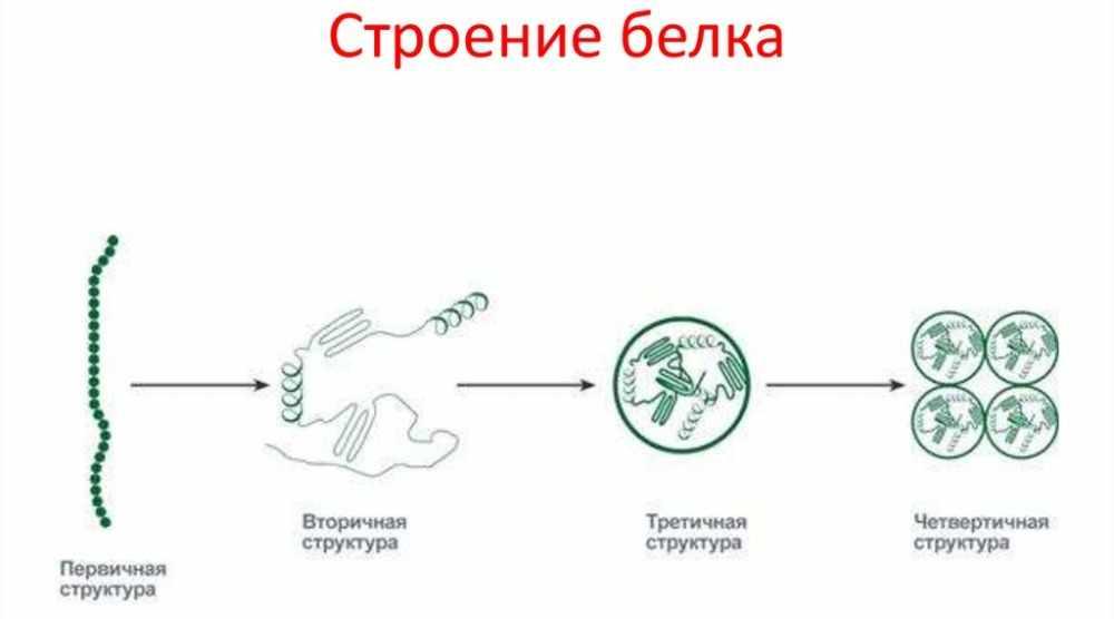 Белки. Строение белка - презентация онлайн