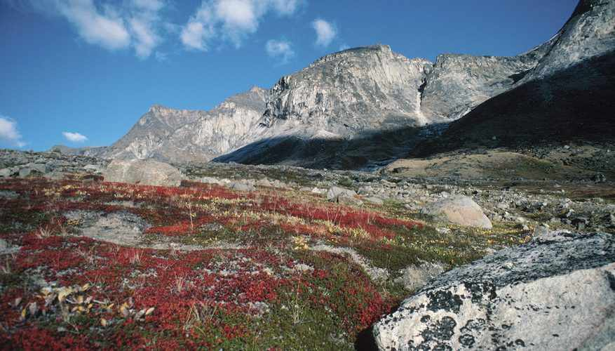 The Biotic Factors for Alpine Tundra | Sciencing