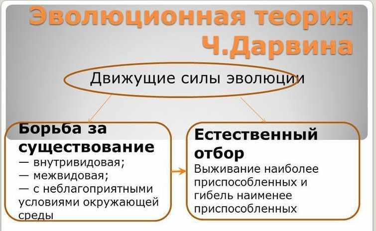 Презентация на тему: Презентация к уроку по биологии (11 класс) по ...