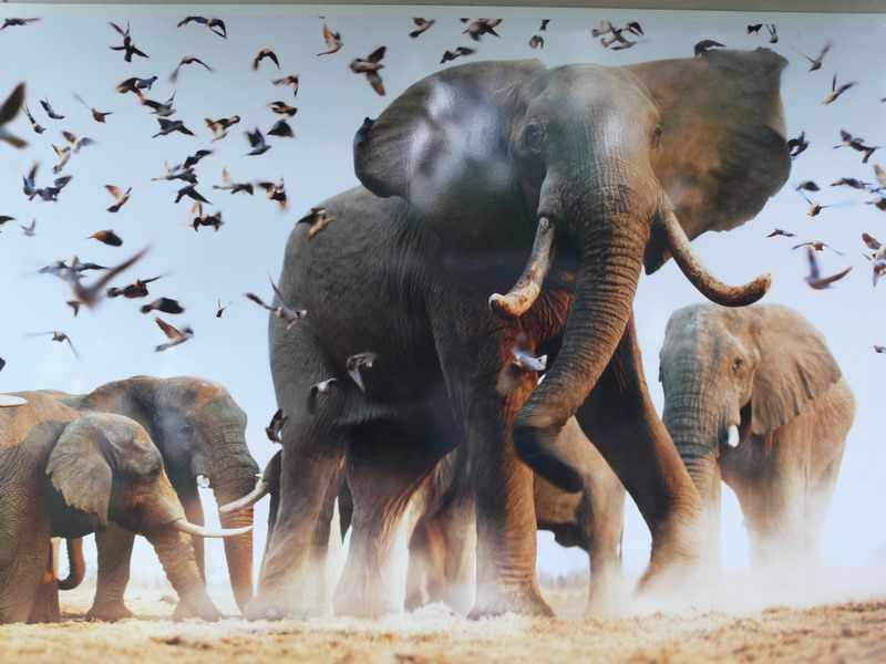 На востоке Индии поезд врезался в стадо слонов - 31 Декабря 2012 ...