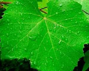 Что такое фотосинтез или почему трава зелёная