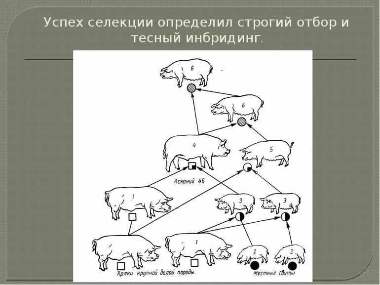 В селекции животных применяют
