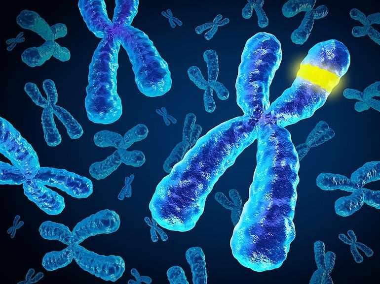 Хромосомная теория