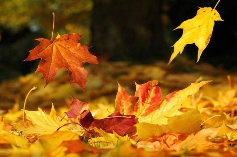 Сочинение про осенний листопад