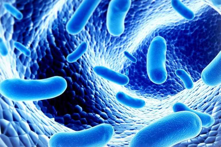Лакто- и бифидобактерии