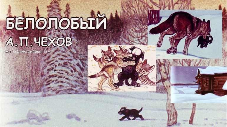 Рассказ «Белолобый»