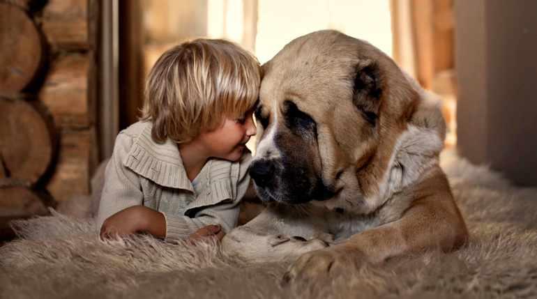 Взаимоотношения детей с животными
