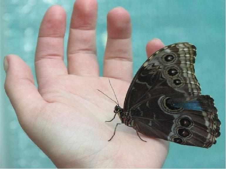 Бабочка анализ произведения платонов