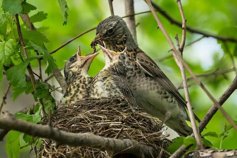 Годовой жизненный цикл птиц