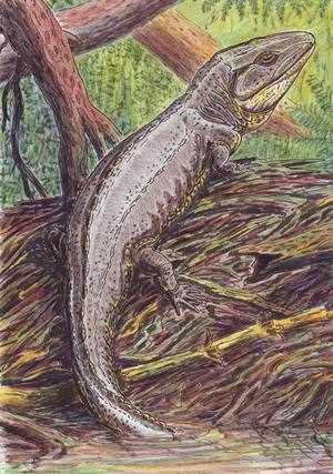 Возникновение земноводных животных в эволюции