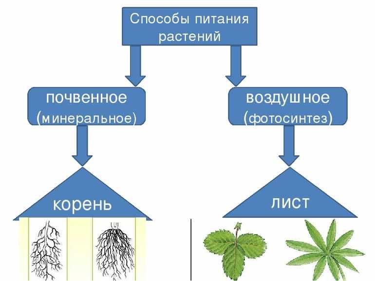 почвенное питание растений