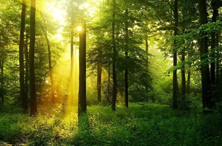 Солнечный дено в лесу