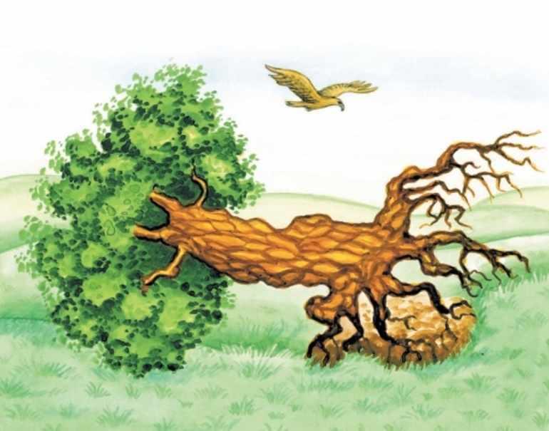 Анализ басни крылова листы и корни