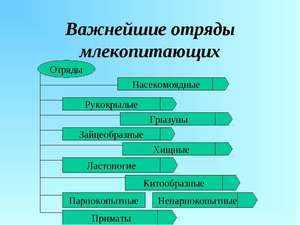 Многообразие плацентарных