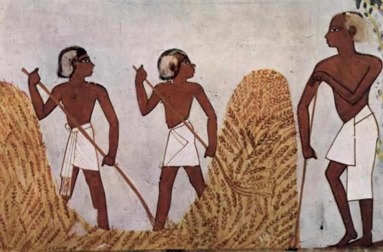 Земледелие в древнем египте