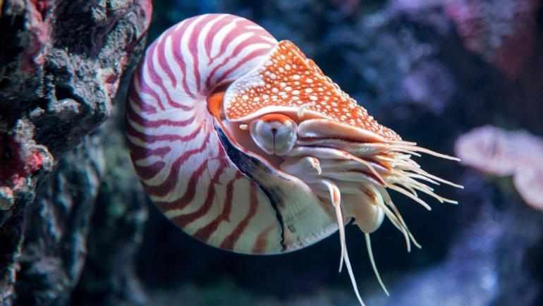 Из из чего состоит сердце брюхоногих моллюсков