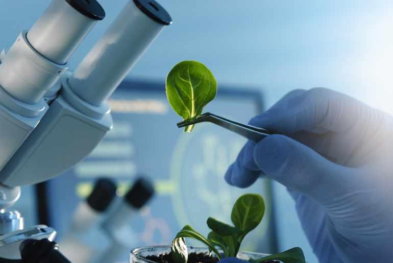 Наблюдение за растениями