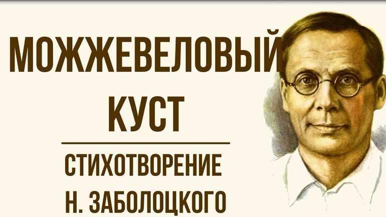 Стихотворение Николая Заболоцкого «Можжевеловый куст»