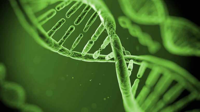 Биология генетика