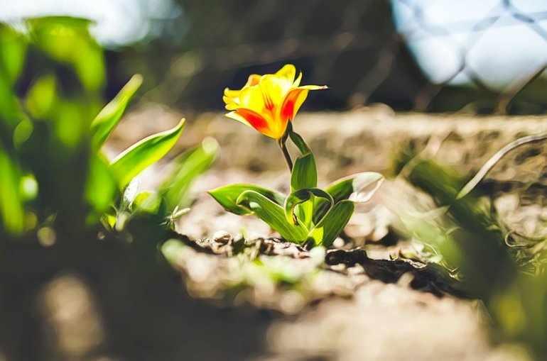 Неизвестный цветок читать