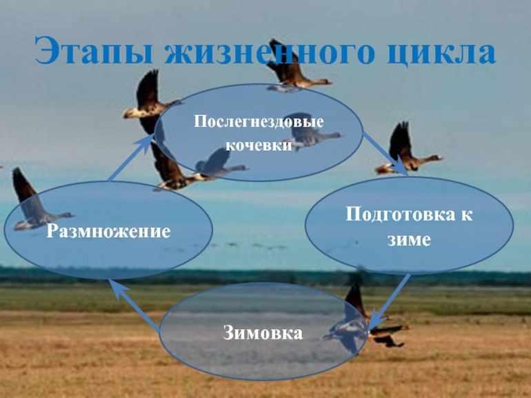 Сезонные явления в жизни птиц