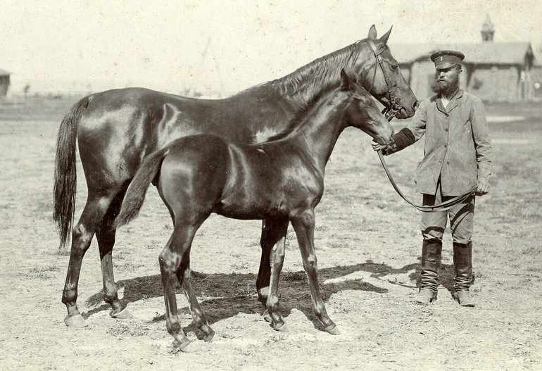 В царские времена тема развития коневодства