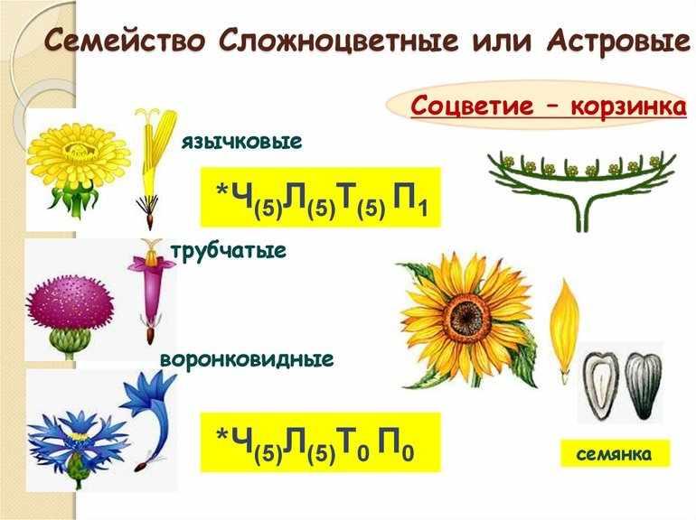 Культурные растения примеры 2 класс