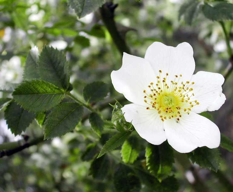 Покрытосеменные растения примеры