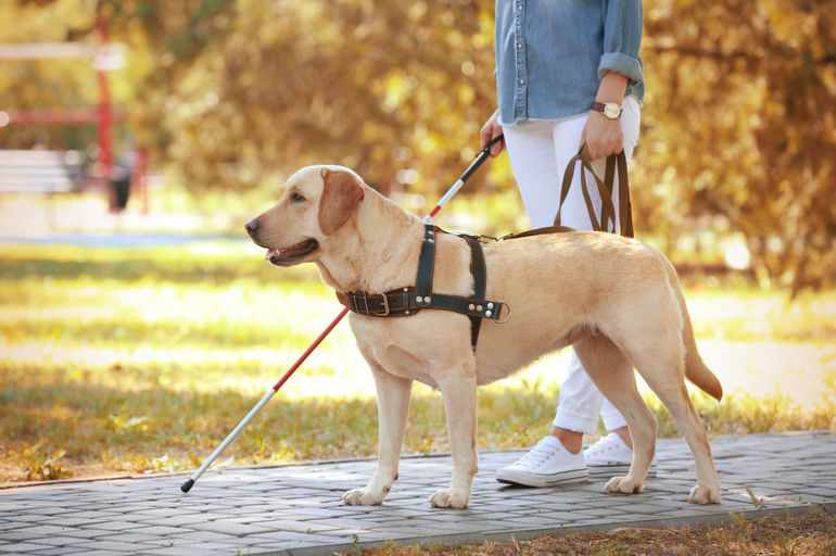 Лучшие помощники собаки